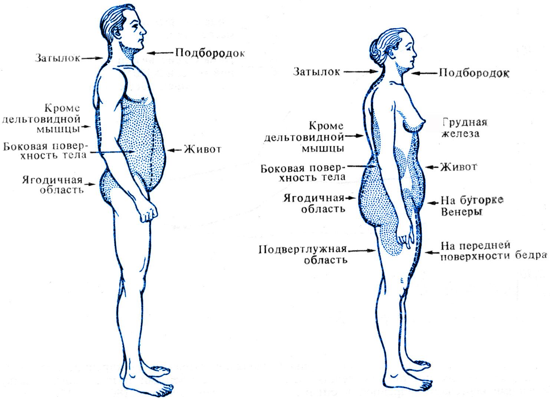 Как распределяется в организме жир и мышечная масса.